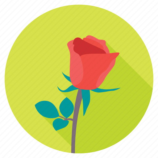 blossom, red rose, rose, rose bud, rose flower icon