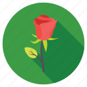 blossom, red rose, rose, rose bud, rose flower icon