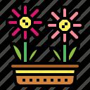 blossom, botanical, flowers, nature