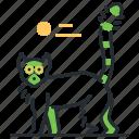 animal, lemur, mammal, wildlife