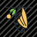 fruit bat, mammal, megabat, species icon