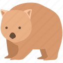 animal, australia, burrowing, common, cute, marsupial, wombat icon