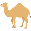 camel, desert, dromedary, hump, one, ride, zoo icon