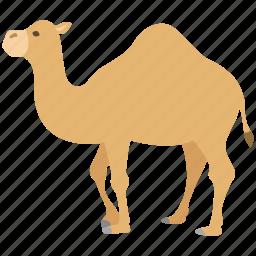 camel, desert, dromedary, hump, one, ride, zoo icon