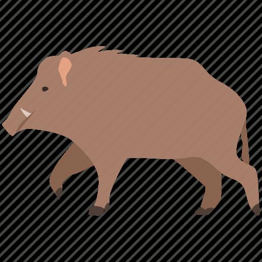 boar, feral, game, hunting, pig, swine, wild icon