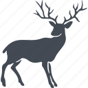 mammals, wild, deer, animal icon