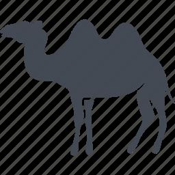 animal, camel, desert, hump, mammals icon