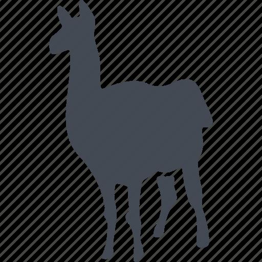animal, lama, mammals, wild icon