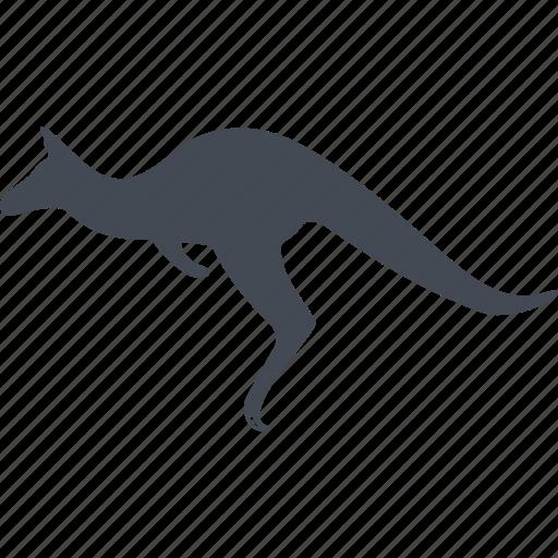 animal, kangaroo, mammals, wild icon