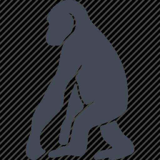animal, chimpanzee, mammals, monkey icon