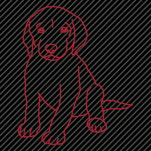animal, dog, doggy, lab, pet, puppy icon