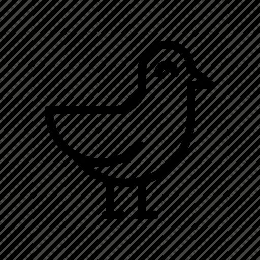 bird, gull, sea, seagull icon