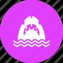 fish, jaws, marine, sea, shark, whale, ocean