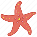 fish, marine, sea, star, starfish, tank, tropical