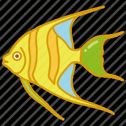 angel, angelfish, aquarium, fish, reef, tank, tropical icon