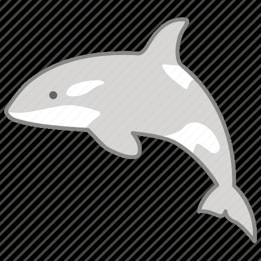 killer whale, mammal, ocean, orca, predator, sea, whale icon