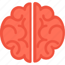 body part, brain, head, human brain, organ icon