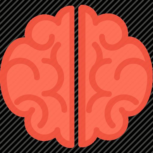 body part, brain, head, human brain, organ icon