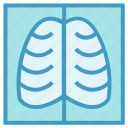 anatomy, human, lungs, medical, ribs icon