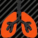 respiratory, system, breath, lungs, body, anatomy, organ