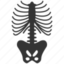 anatomy, bone, bones, chest, sceleton, skeleton, spine icon