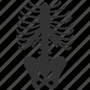 spine, skeleton, bones, sceleton, anatomy, chest, bone
