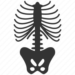 anatomy, bone, bones, chest, sceleton, skeleton, spine icon
