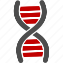 dna, gene, health, medicine icon