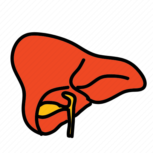 ache, biology, health, hospital, liver, medical, pain icon