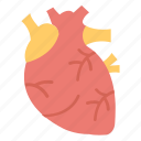 biology, cardiac, cardiology, coronary, human heart, organ icon