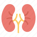 body part, human biology, human kidneys, human organ, kidneys icon