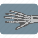 bones, hand bones, radiology, x ray, x ray bone, x ray plate icon