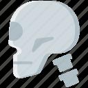 bone, head, skeleton, skull