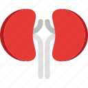 hospital, kidney, kidney icon, medic, medical, medicine, organs icon