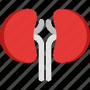 hospital, kidney, kidney icon, medic, medical, medicine, organs