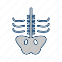 bone, halloween, skeleton, skull, xray icon