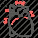 cardiology, heart, cardiovascular, anatomy