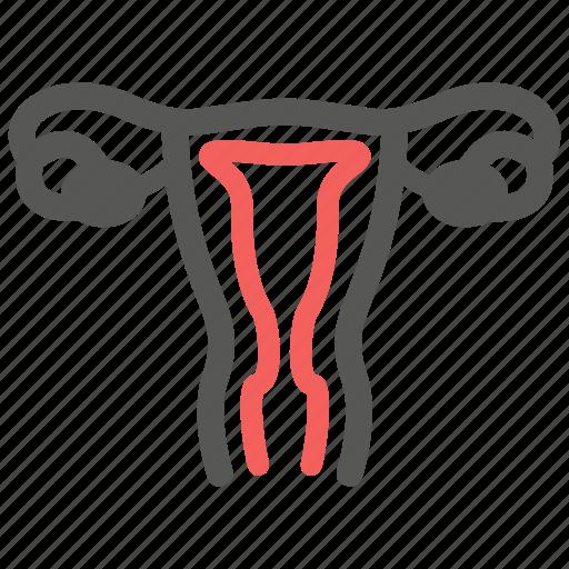genital, gynecology, ovary, reproductive, uterus, woman icon
