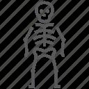osteology, bone, halloween, horror, skeleton, skull