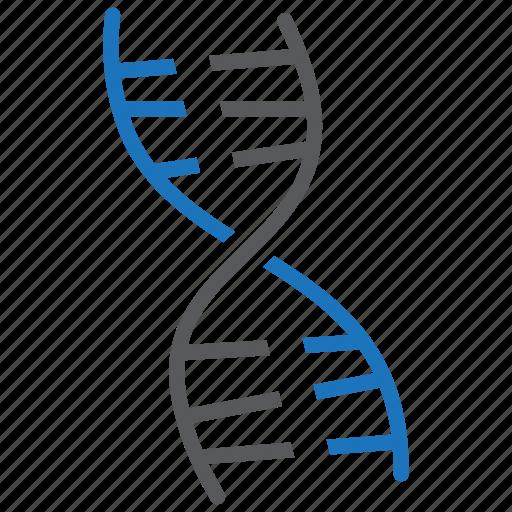 chromosome, dna, gene icon