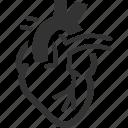 anatomy, cardiology, cardiovascular, human heart icon