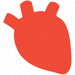heart, human organ, medical care, organ icon