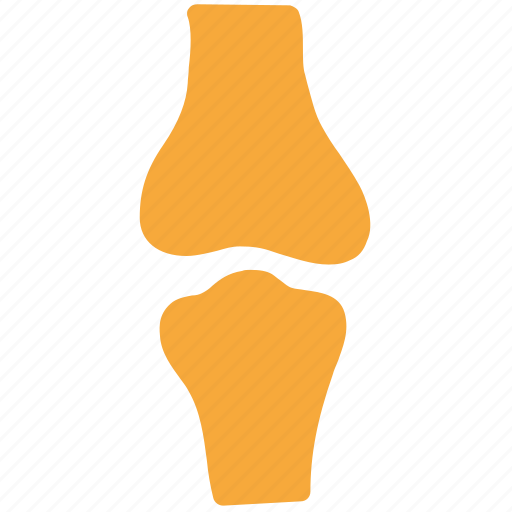 bone, human bones, joint, knee joint icon