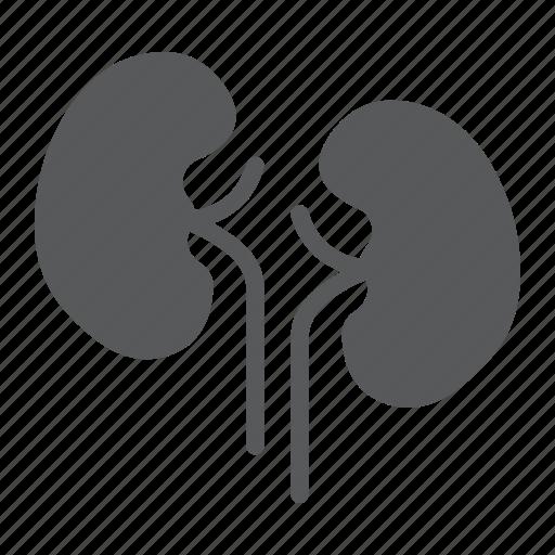 anatomy, biology, health, human, kidney, organ, urology icon