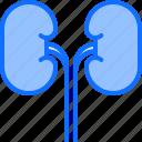 kidney, medical, medicine, organ, pharmacy, treatment