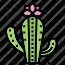 cactus, desert, mexico, plant icon