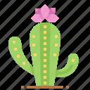 cactus, desert, mexico, plant