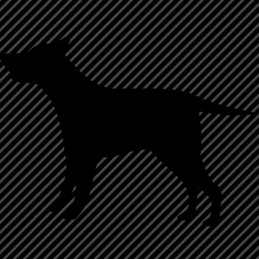 animal, animals, dog, pet, pets icon