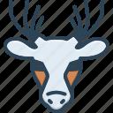 antler, deer, herbivores animal, horn, mammal, reindeer, wildlife