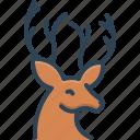 antler, deer, herbivores animal, horn, hunting, reindeer, wildlife
